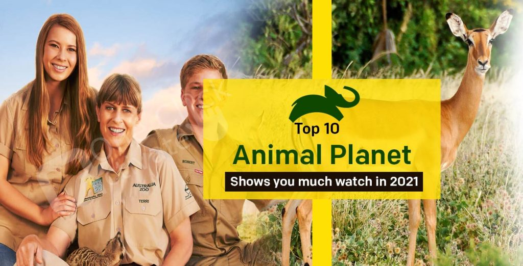 Top 10 Animal Planet Shows You Must Watch in 2021