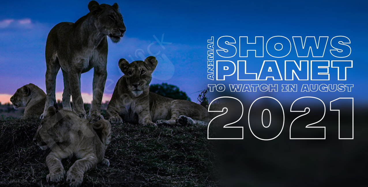 Animal Planet Shows of August 2021